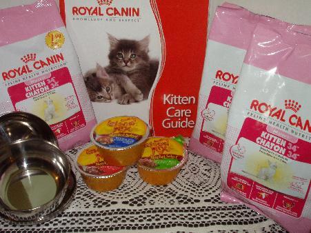 Kitten Gift Packs